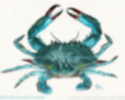Blue Crab watercolor by Amer Mrine, Copyrigh 2013, all rights reserved.