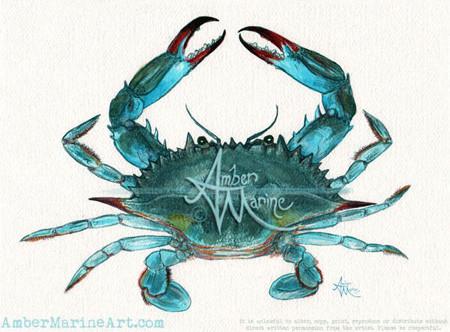 Blue Crab Watercolor by Amber Marine, © 2013, All Rights Reserved.