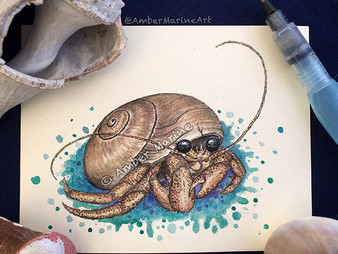 "New Art: ""Hermes"" the Hermit Crab!"