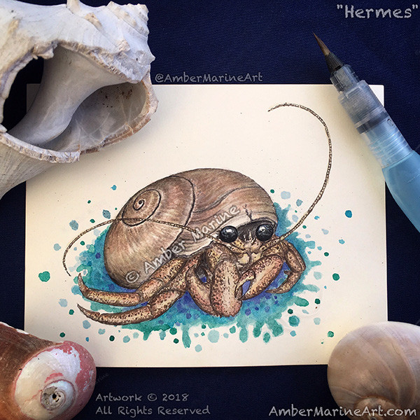 """""""Hermes"""" hermit crab watercolor by Amber Marine, © 2018, All Rights Reserved."""