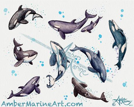 Orca Pod in Watercolor ~ 2019 ©