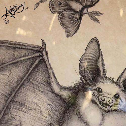 """night Flight"" bat and luna moth illustration by Amber Marine, © 2018, all rights reserved."
