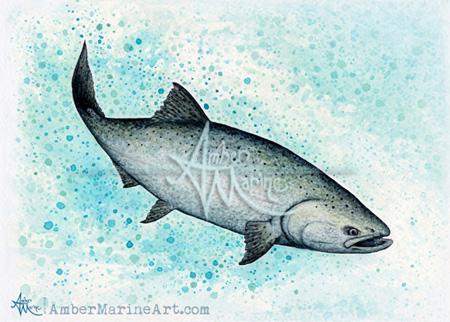 Salmon Splash ~ 2016 ©