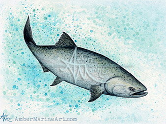 The King! Chinook Salmon
