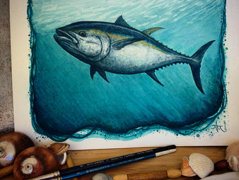 May - Bluefin Tuna!