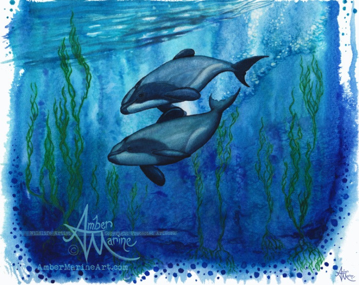 Maui's dolphin watercolor painting by wildlife artist Amber Marine