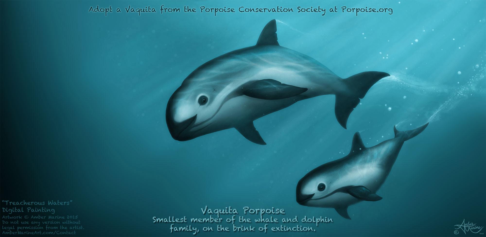 Treacherous Waters, Vaquita Art by Amber Marine