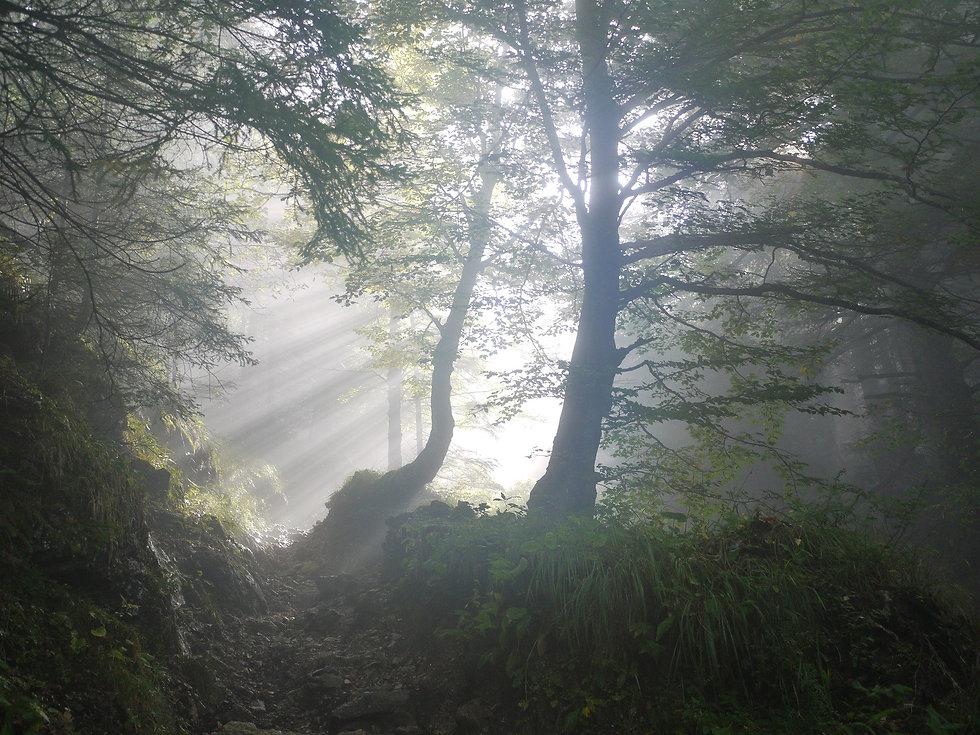 Forêt 3.jpg