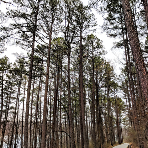 1000 Hills State Park - Kirksville, MO