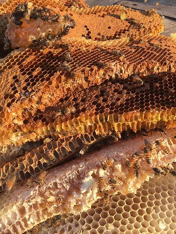 bees2.jpg