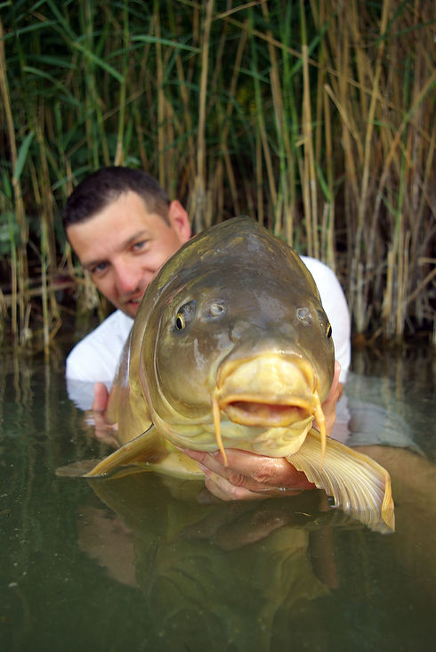 A fisherman holding a giant mirror carp.