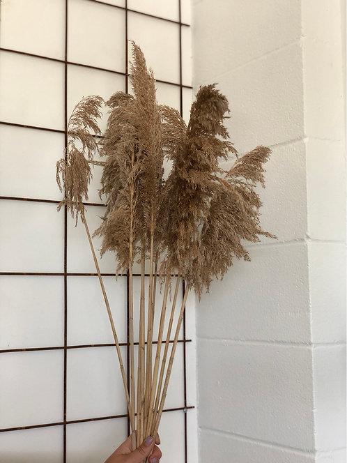 "Grey Reed Grass - 28"""