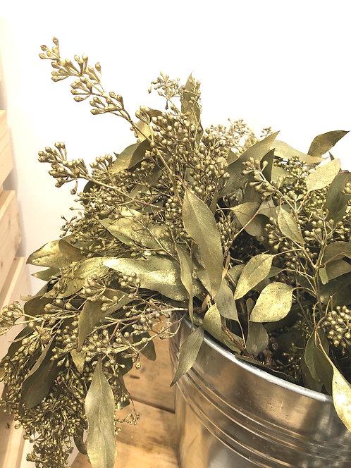 Painted Gold Eucalyptus