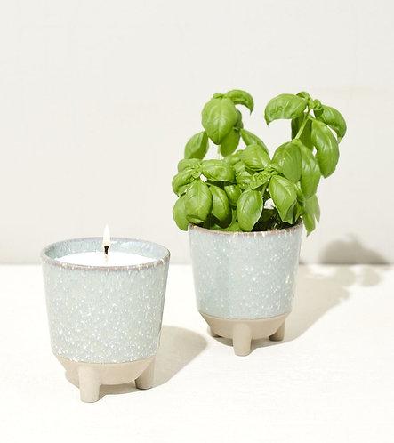 Glow + Grow basil kit