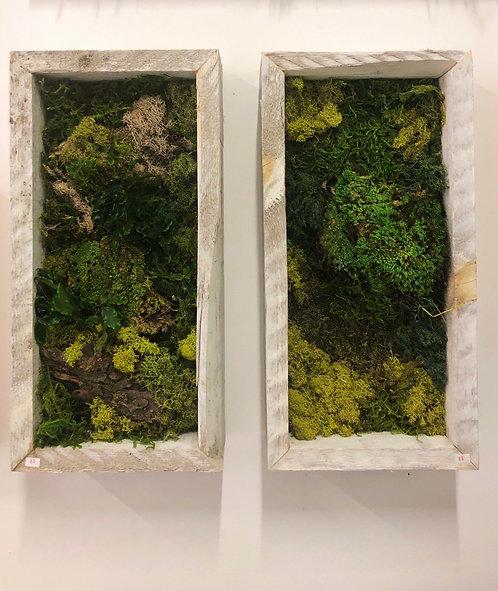Large Framed Moss