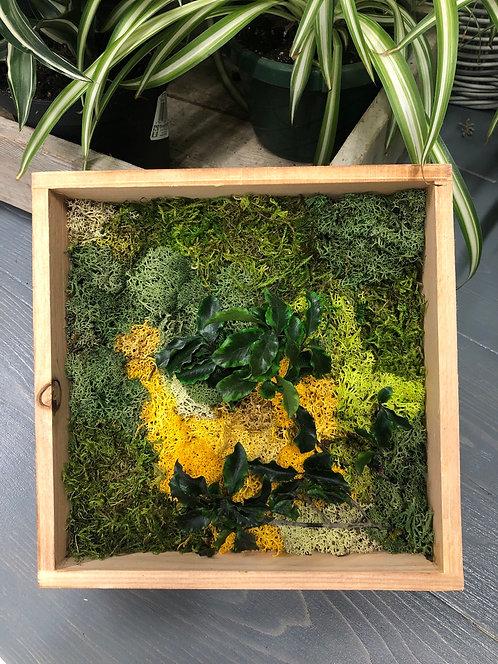 Mini moss - cedar frame