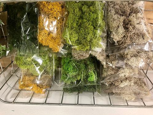DIY Mini Moss Pack
