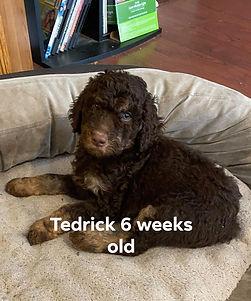 Tedrick6wks.jpg