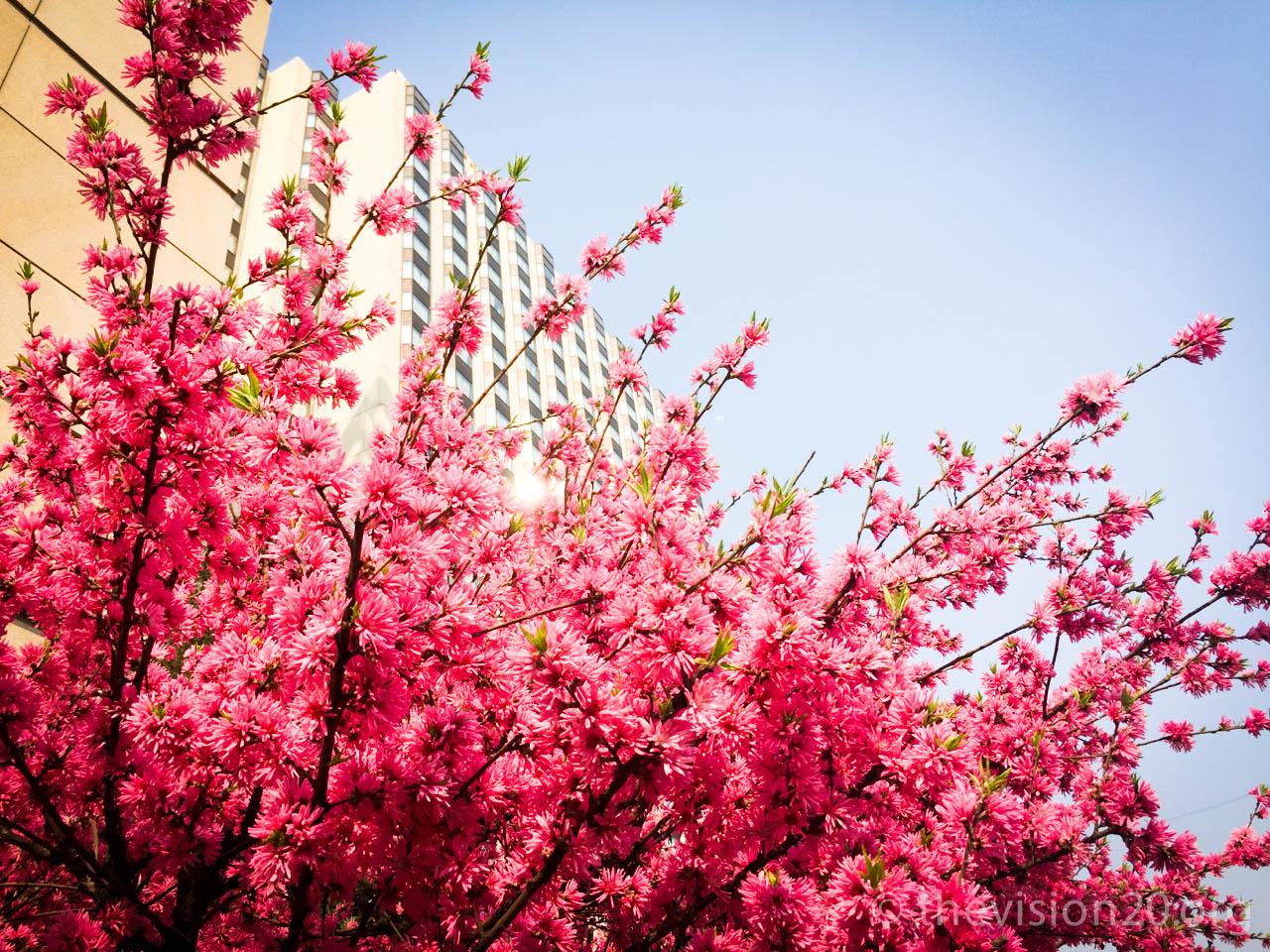 YvesT-Vision20_Photos_Hangzhou- - 137