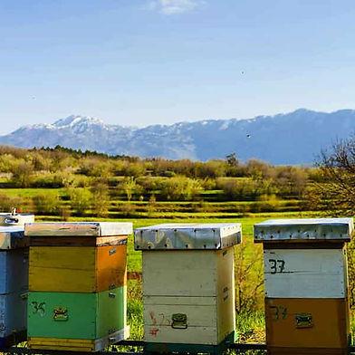ruches cire abeille france bees wrap apiculture ecologique