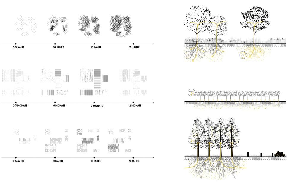 F_website_TXL_web_ecological pattern1_ed