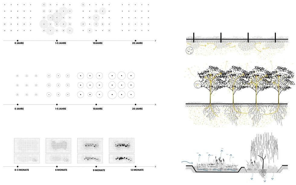 F_website_TXL_web_ecological pattern2_ed