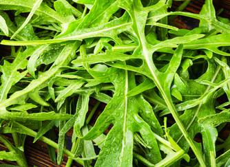 Dicas Infalíveis para Cultivar Rúculas Super Saborosas