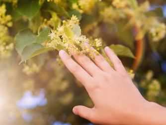 Conheça Plantas que Podem Curar seu Corpo e sua Alma