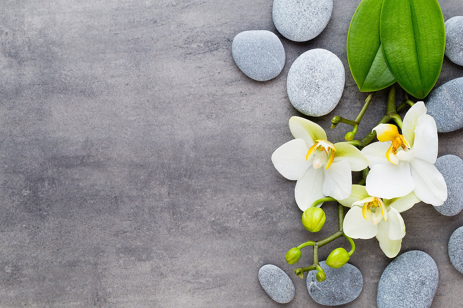 orquidea-como-plantar.jpg