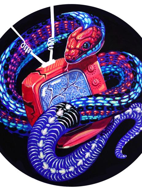 SF Garter Snake