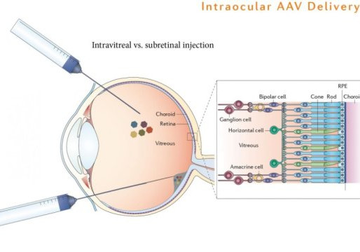 Blind mice regain sight with single gene insertion.