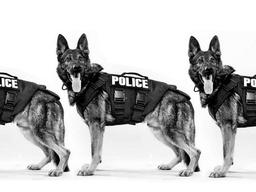 """China Clones Top Police Dog, With Goal of """"Mass Production"""""""