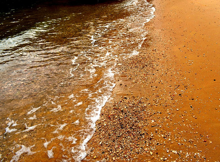 Red Tide Report SW Florida