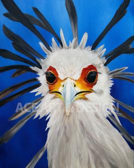 Alfred, The overrly Judgemental secretary bird