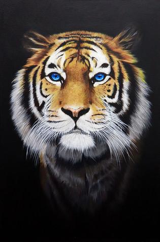 Tiger's stripes