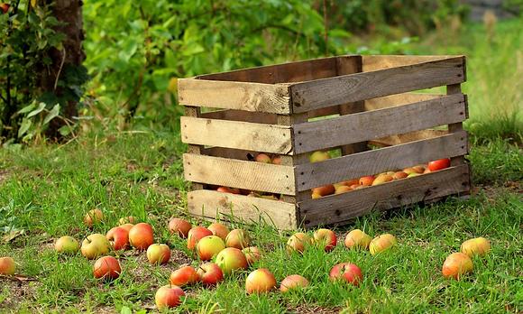 Apfelmix 3 versch. Sorten kg