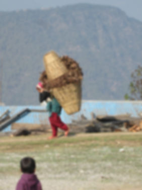 Carrying home feed for the animals, coll