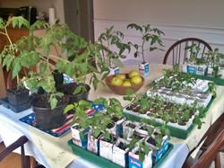 great looking seedlings
