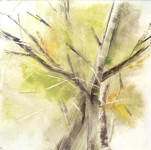 "Tree study III, monotype on BFK Rives papaer, 12x12"""