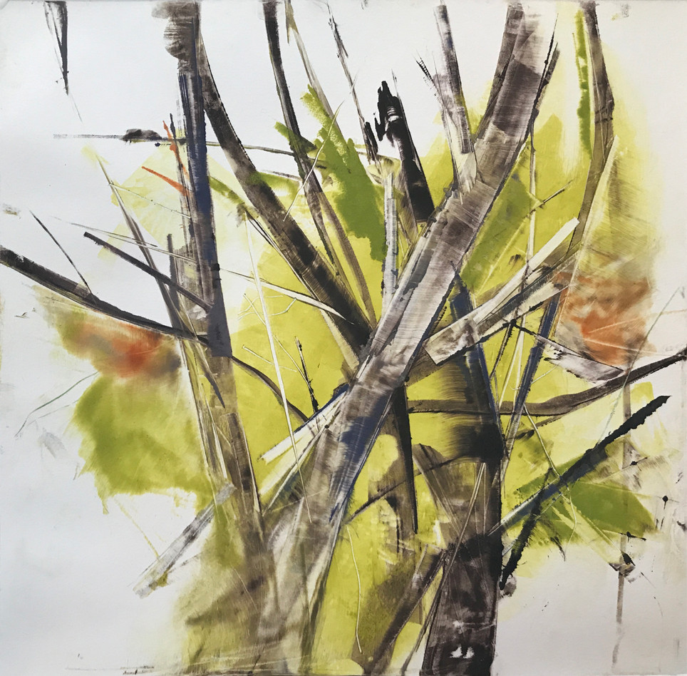 Tree study, monotype on BFK Rives paper, 12x12""