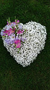 Gypsophila_and_Freesia_heart_-_from_£35.JPG
