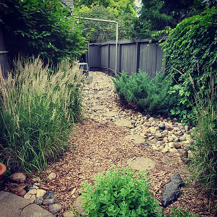 Carl Forester grasses, mulch, junipers, and weed cleanup in Tuxedo