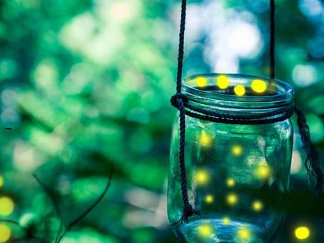 Krijesnice - igra svjetlosti pred izumiranjem