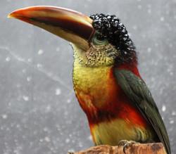 IMG_0080 oiseau