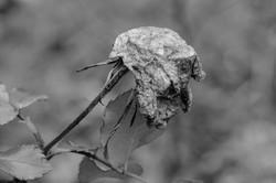 nature-morte-mb-DSC_5521
