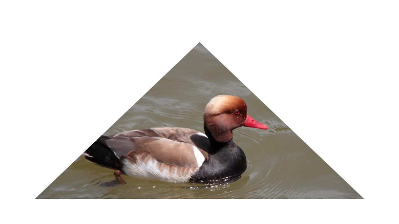 photo triangle 3-sl