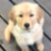 Puppy.jpg