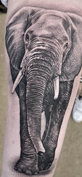 Micro detailed realistic elephant tattoo black and grey