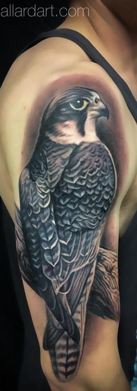 megan allard peregrine falcon