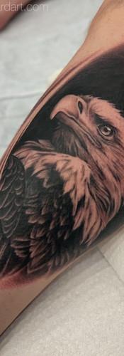 megan allard bald eagle.jpeg